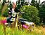 Experienta vintage cu motocicleta cu atas in Bucuresti
