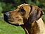 Initiere Dresaj Canin in Bucuresti
