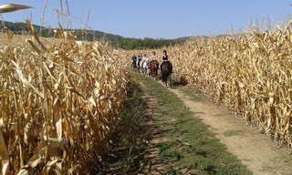 Drumeie in natura in Alba Iulia