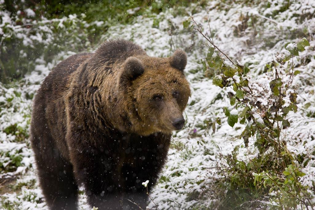 Bear Watching Short Break pentru intreaga familie in Brasov / Bran