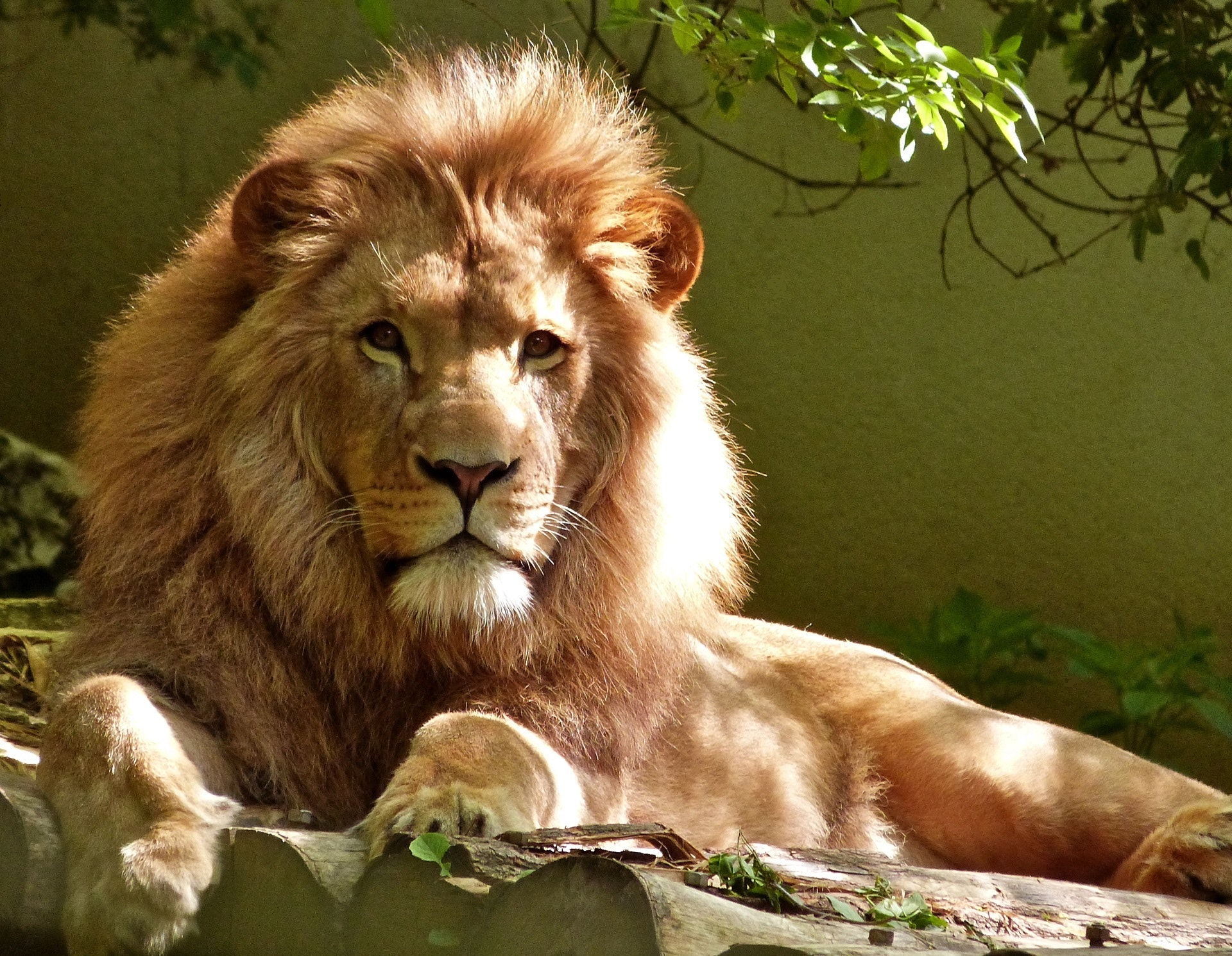 Zoo keeper pentru o zi