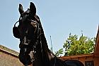 Initiere in calarie in Alba-Iulia pentru 2