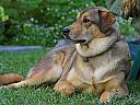 Initiere dresaj canin in Cluj-Napoca