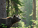 Bear Watching - Aventura pe Urmele Ursilor pentru 2
