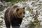 Bear Watching – Short Break pentru intreaga familie in Brasov / Bran