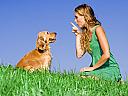 Initiere dresaj canin in Iasi